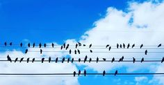 Birds on a wire in #atx