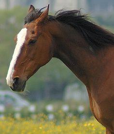 Kop van een paard