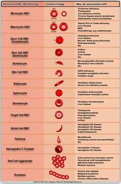 Hematology cells