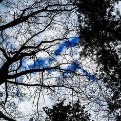 【shogo.ni】さんのInstagramをピンしています。 《寒空の中、今年最後の九大の森へ * ** *** *** #nikon#nikond5300#d5300#japan#福岡#fukuoka#写真好きな人と繋がりたい#ファインダー越しの私の世界#instagramjapan#instagood#nature#green#sky #tree #空 #木 #雲 #光 #cloud #青 #冬 #blue #そら #ソラ #影 #森 #九大の森》