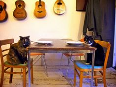 Cat dinner party!