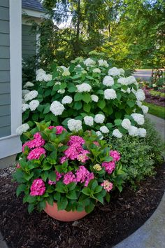"""These are """"Proven Winner"""" hydrangeas that will take part sun."""
