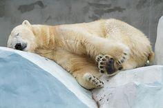Мишута уснул...и вам спать пора, спокойной ночи, дорогие!!! До завтра!
