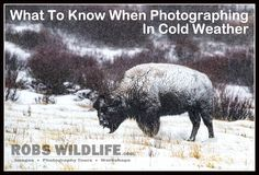 Are you a photographer? Here are some things you need to know when photographing in cold weather   RobsWildlife.com