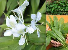 Muitas vezes deixadas de lado, elas podem ser incorporadas ao cardápio (Foto: ThinkStockPhotos) | Plant