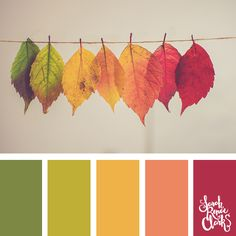 Delicate Autumn leaves | Click for more fall color combinations, mood boards and seasonal color palettes at http://sarahrenaeclark.com