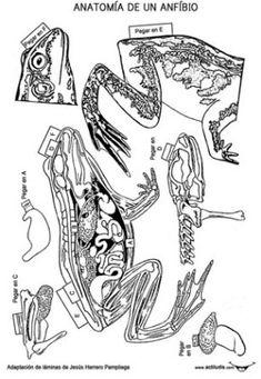 Láminas realizadas por Jesús Herrero Pampliega y que la editorial SENA publicó en el año 1986. Agotada dicha edición y basándome en estas láminas he preparado unas nuevas en la cual he ampliando el tamaño y quitado el color para que todo esto lo puedan realizar los alumnos/as. Los ficheros … Colegio Ideas, Science Biology, Marine Biology, Science For Kids, Interactive Notebooks, Kids Education, Nature, Parenting 101, Fun Stuff
