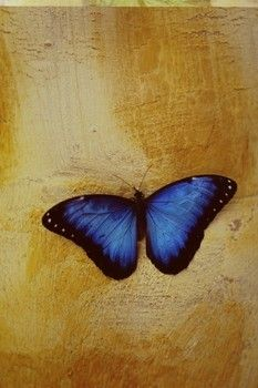 Exotic Butterfly Art