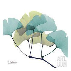 Gingko Art Print by Albert Koetsier at Art.com