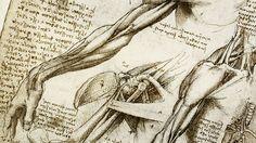 Human body. Art. Form. Organic shapes.