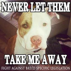 FIGHT AGAINST BREED SPECIFIC LEGISLATION!!!!