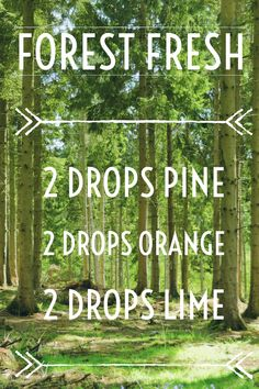 Diffuser Blend - Forest Fresh - 2 drops pine, 2 drops orange, 2 drops lime #Aromatherapy