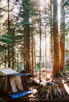 Dappled sunlight through the trees, breakfast in the woods. I would like to be waking up here.