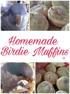 Homemade Birdie Muffins For Your Feathered Friend