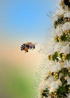 Trabalhe... trabalhe muito... trabalhe sempre... a favor de você, de seus sonhos, de seu mel...