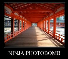 Only ninjas can see other ninjas.
