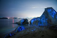 Bioluminescent Shrimp Are The Gorgeous Natural Wonders You've Been Waiting For