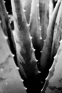 WEEK 2 - Aaron Siskind inspired, abstract, black and white Texture Photography, Abstract Photography, Light Photography, Macro Photography, Black And White Photography, Amazing Photography, Landscape Photography, Black And White Landscape, Black And White Abstract