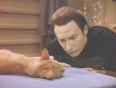 "From ""Star Trek: The Next Generation,"" this is Spot, Data's cat. (Brent Spiner is the actor portraying Data.) In this ""Spot Appreciation Thread,"" click through for some other photos and the moderately hysterical poem Data wrote, ""Ode to Spot."" (First lines: ""Felis Cattus, is your taxonomic nomenclature, an endothermic quadruped carnivorous by nature?"" See a video clip of Data declaiming it here: http://www.youtube.com/watch?v=SySZdvsFYt4)"