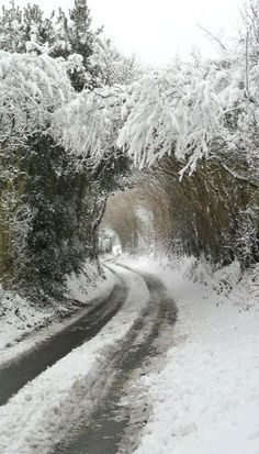 Snow covered trees make an archway, Hobs Hole Lane, Aldridge, Walsall, England