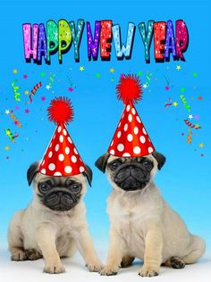 Cute Pug Puppies Happy New Year