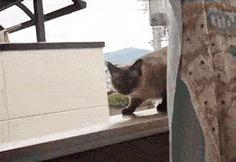 gatos-esquecidos-2