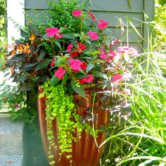 Owner and designer Toni Cross blends various plants and containers that reflect your taste and thrive in your location to create the perfect container garden for you.