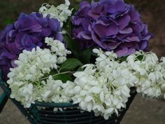 Some of our hydrangeas   artfromperry   2015