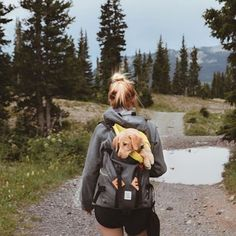 Can I just be a puppy so I can go on adventure backpack rides? Anyone with me? @kirstinwhitingg #backcountrypaws