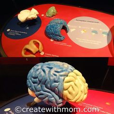 Brain: The Inside Story exhibition at the Ontario Science Centre