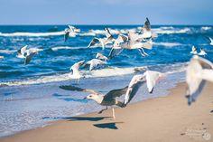 Bird, Animals, Proud Of You, Animales, Animaux, Birds, Animal, Animais