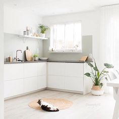 Another incredible home from the Netherlands - that of @keeelly91  the pops of green in this home are epic - we have belly baskets like this in stock now for holding your pot plants and 15% off in our sale