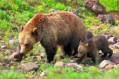The U.S. Fish and Wildlife Service has received more than 650,000 comments about protections for the sacred animal.