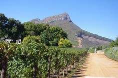 The wines of Thelema Mountain Vineyards, Stellenbosch, South Africa Wineries, South Africa, Vineyard, Cape, Coastal, Mountain, Country Roads, Ocean, Outdoor