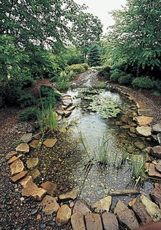 Water Garden in Your Backyard: attract frogs, toads, garden snakes who eat insects, grubs, slugs. Fish gobble up mosquito larva, toads & snakes eat adults.  Floating plants w/o rooting: Water hyacinth, Water lettuce, Parrotsfeather, Golden club. Marginal & Bog Plants (shallow): Japanese/Siberian iris, Taro, Horsetail rush, Curly rush, Sweet flag iris, Sagittaria, Arrow head, Lotus. Underwater Plants (food, shelter, spawning places for fish, filter & aerate): Hornwort, Anacharis, Cabomba.