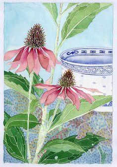 echinacea GABBY MALPAS