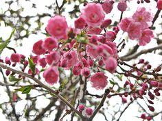 Pink Blossom Tree. PolkaSpot Homestead. 2013.