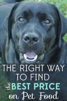 Are you really getting the best price on pet food? You might be overlooking one very important thing and spending way too much! Budgeting Worksheets, Budgeting Tips, Frugal Living Tips, Frugal Tips, Ways To Save Money, Money Tips, Make Money From Home, Make Money Online, Setting Up A Budget