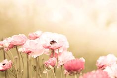 flower photography floral botanical photography by mylittlepixels