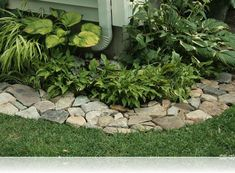 ornamental plants for edging flower bed - Google Search