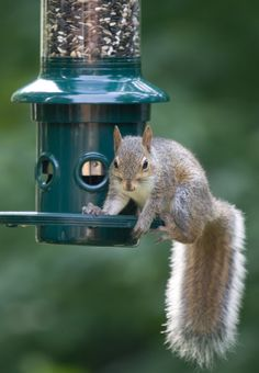 Our bird feeders prevent squirrels from eating the seeds that are meant for birds but remember, squirrels deserve some food too. Just leave a few peanuts under your feeder or around your yard and you will keep everyone happy. The birds as well as the squirrels.