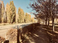 View of autumn