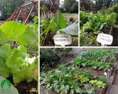 Grządki podwyższone w przedszkolu (gardens beds in nursery school)