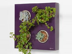 AT:LA reader, katalyst pointed out a more modern and refined version of the same idea as the Indoor Living Wall Planter we recently posted. Vertical Garden Design, Rock Garden Design, Small Garden Design, Small Indoor Plants, Cool Plants, Outdoor Plants, Indoor Outdoor, Living Wall Planter, Wall Planters