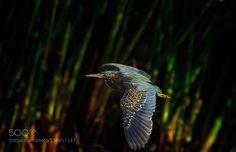 http://ift.tt/1ZY8ZTJ #Nature breathtaking #Photos the flybye by strock http://ift.tt/1SmLZK6