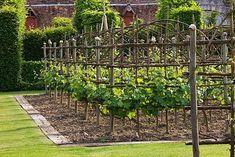 The Garden You Need: 054796.jpg