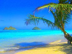 Lovely Lanikai Beach. Snorkel, kayak to the islands, see sea turtles!