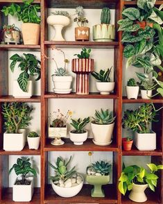 Planters for your succulents - The Jungalow Indoor Garden, Indoor Plants, Pot Plants, Green Plants, Planting Succulents, Planting Flowers, Flower Plants, Plantas Bonsai, Decoration Plante