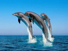 Nadar com golfinhos, no México