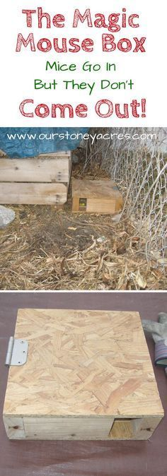 The Magic Mouse Box. The Magical Mouse Box is a simple solution we have been using for years to help control the mice population around our chicken coop and compost bins. Build a few of these and your mice problem will magically disappear! Tips And Tricks, Easy Chicken Coop, Farm Chicken, Chicken Eggs, Chicken Life, Chicken Feed, Chicken Ideas, Mouse Traps, Building A Chicken Coop